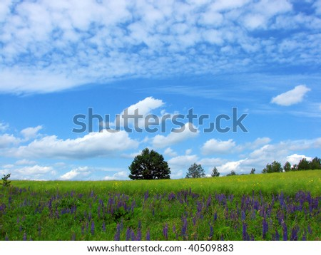 landscape with a field, blossoming flowers,  tree and  sky with clouds