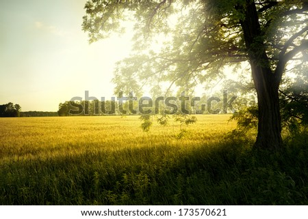 landscape with tree on the field  - stock photo