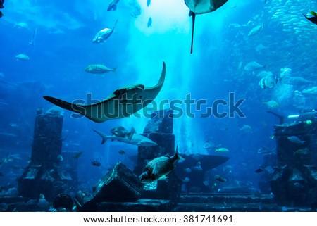 Large aquarium in Dubai, UAE - stock photo