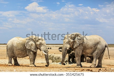 2 Large elephants next to a waterhole in Etosha National Park with a blue sky background