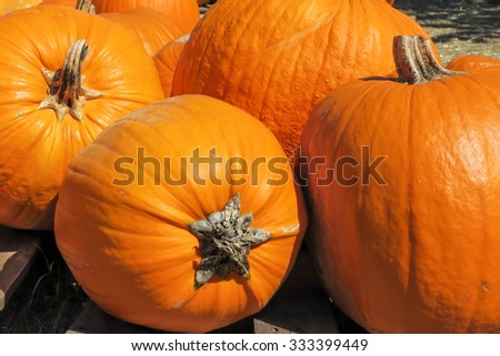 4 large pumpkins - stock photo