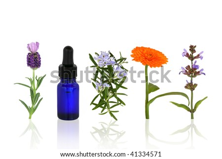 Lavender, rosemary, marigold and sage herbs in flower with an aromatherapy essential oil blue glass dropper bottle in a line, over white background with reflection. - stock photo