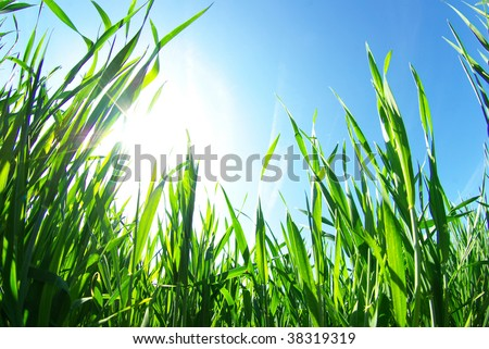 lawn isolated on sky - stock photo
