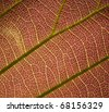 leaf macro texture - stock photo