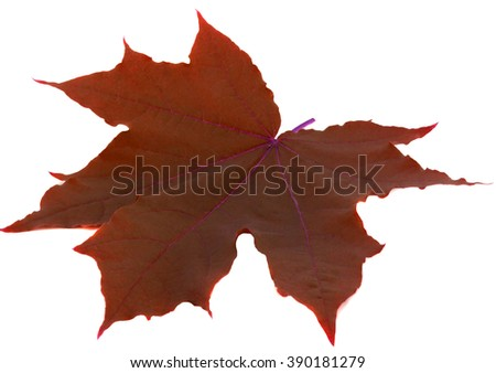 Leaf on a white background - stock photo