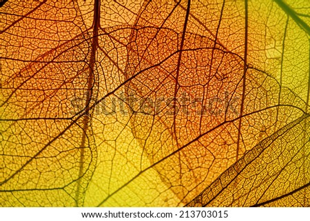 leaf texture - in detail - stock photo