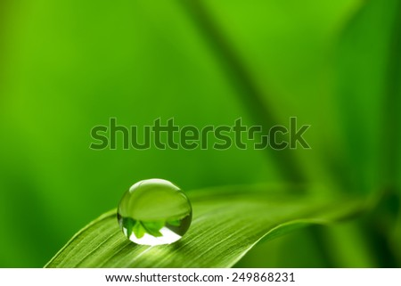 leaf with rain droplets  /  green background with rain droplets - stock photo