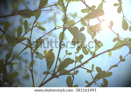 leaves and twig Tree on sky blurry lights background blue tone - stock photo