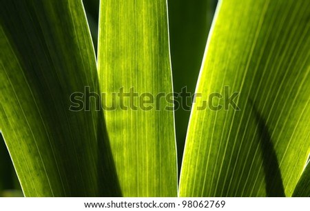 leaves background - stock photo