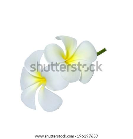 Leelawadee flowers - stock photo