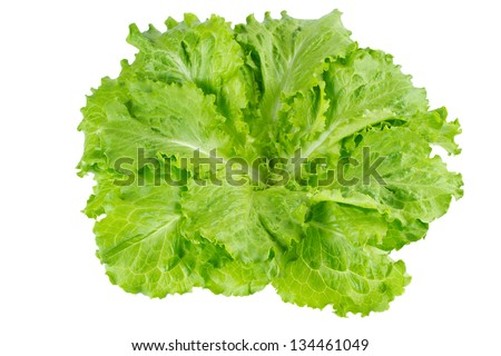 lettuce in isolated white background - stock photo