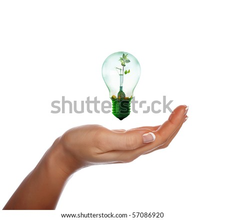 light with a small  sprout - stock photo