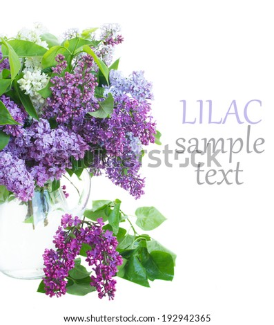 Lilac in glass jar  isolated on white background