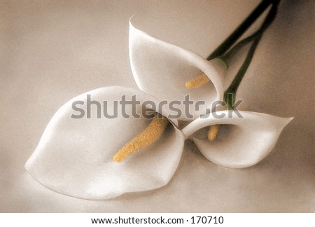 3 lilies sepia & colored, art - stock photo