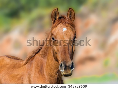 Little foal very carefully looking at photographer - stock photo