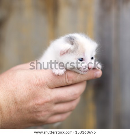 little kitten sitting on the palms, outdoors
