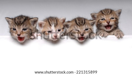 4 Little Kittens - stock photo