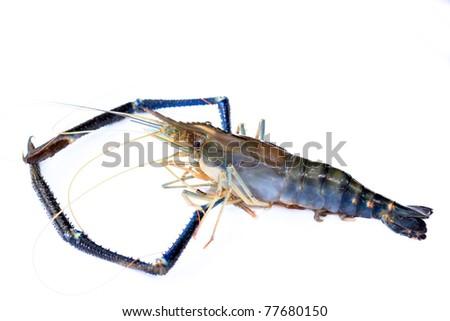 lobster or giant freshwater prawn - stock photo