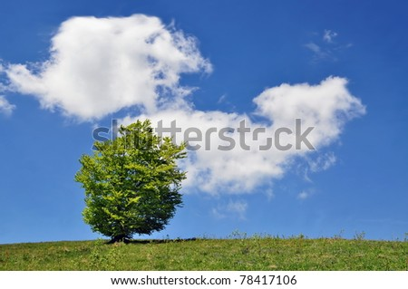 Lonely tree against the huge sky with a cloud