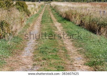 long grass road - stock photo