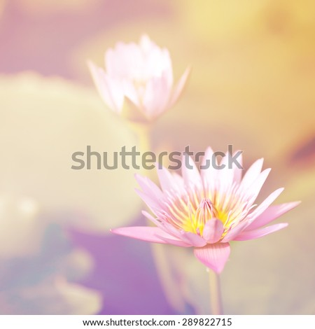 Lotus flower in pond vintage photo filtered retro style. - stock photo