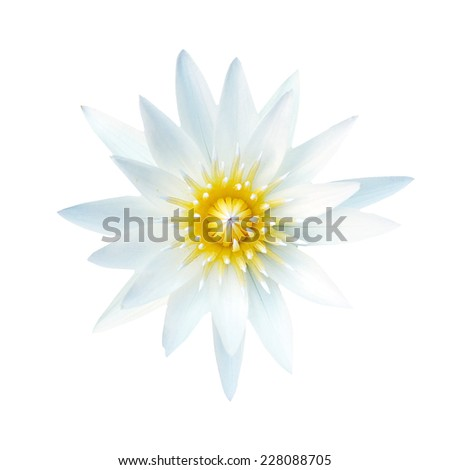 lotus flower isolate on white background. Lotus frame - stock photo