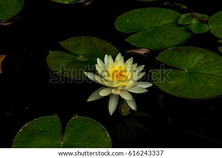 Lotus flower meanings on pinterest thailand stock photo royalty lotus flower meanings on pinterest thailand travel the lotus flower represents one symbol of fortune in mightylinksfo