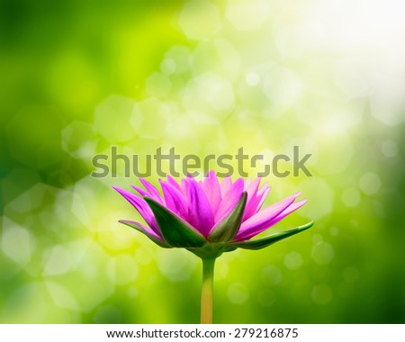 Lotus flower on green background. - stock photo