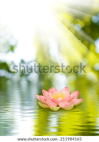lotus flower on the water against  the sun background - stock photo