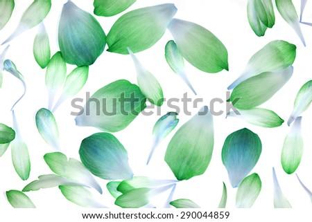lotus petals isolated on white background - stock photo