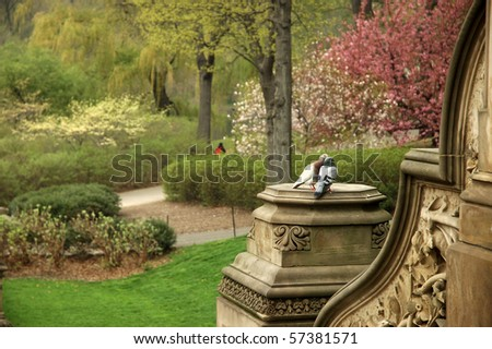 2 Love Birds in a Beautiful Park - Central Park, New York, USA - stock photo