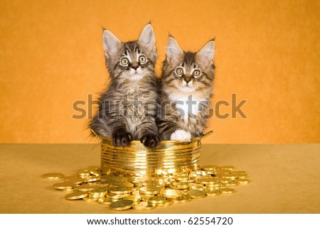 2 Maine Coon kittens in brass pot with coins - stock photo