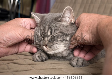 male hand gently caresses a cat