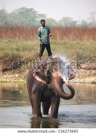Man washing his elephant on the banks of river in Chitwan park in Nepal - stock photo