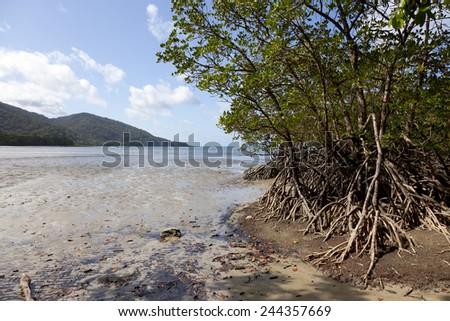 Mangrove trees on the beach of Cape Tribulation, Queensland,Australia - stock photo