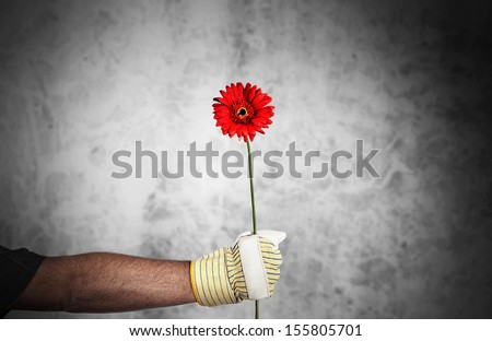 Mans hand with work glove holding red flower - stock photo