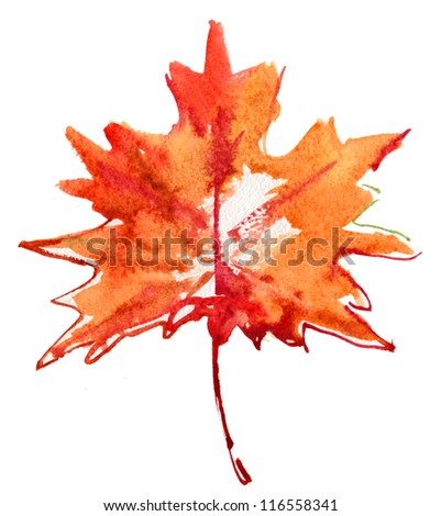 maple-leaf watercolor isolated on white background. - stock photo