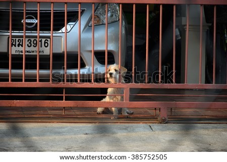 4 mar 2016 BANGKOK, THAILAND, a little dog be at front of own'home. it's a best friend of people.