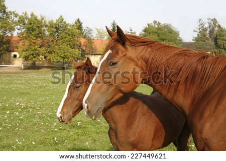 Mare and her few weeks old foal in summer meadow - stock photo