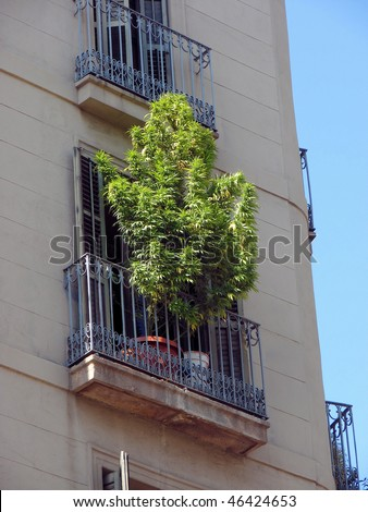 marihuana bush on a balcony in barcelona, spain, catalonia - stock photo