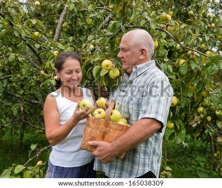 Mature couple in garden  picking apples.