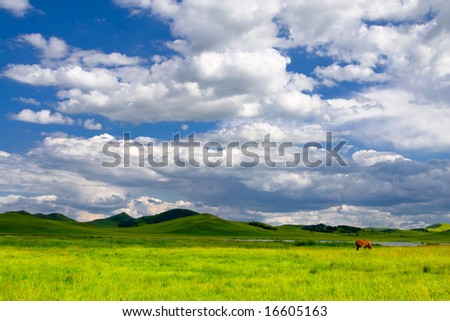 Meadow,the blue sky and white clouds