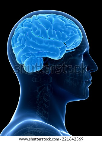medical illustration of a human brain