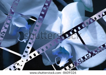35mm background with orchid background.Film in blue