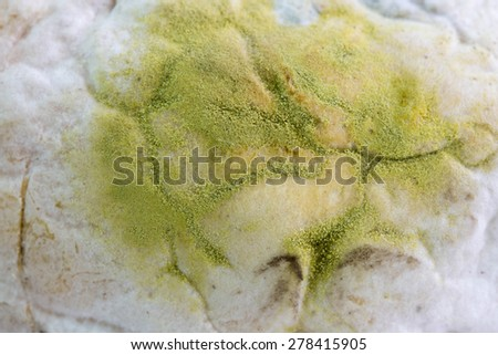 mold on bread - stock photo