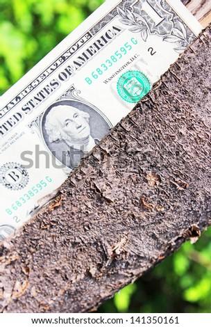 Money tree  - stock photo