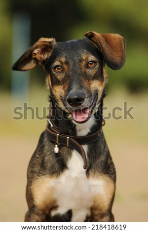 mongrel dogs - stock photo