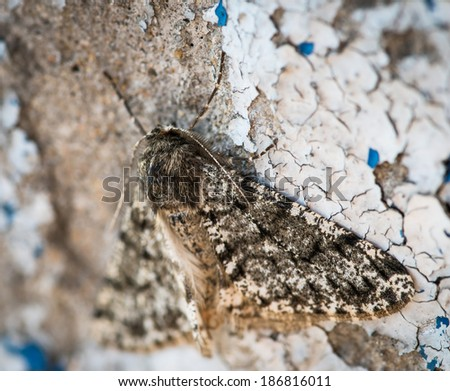 Moth resting on wall. Selective focus with shallow depth of field.