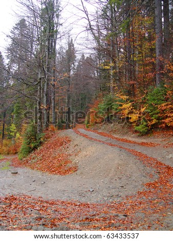 Mountainous road and forest orange