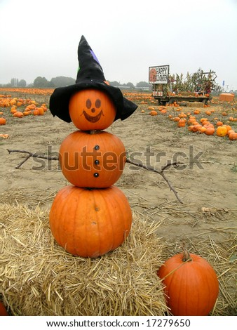 Mr. Pumpkin is outstanding in his field - stock photo
